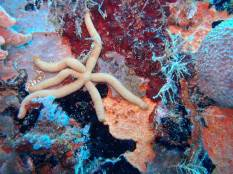 Starfish on the Wreck of the River Tau