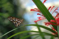 Day Gardens Butterfly by Cathy Ulrich