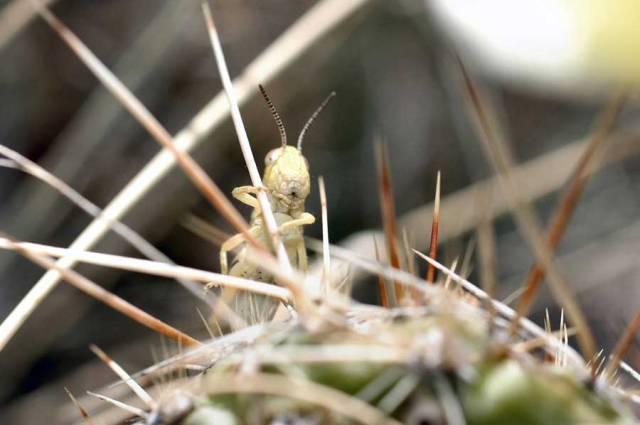 Jiminy's Cactus
