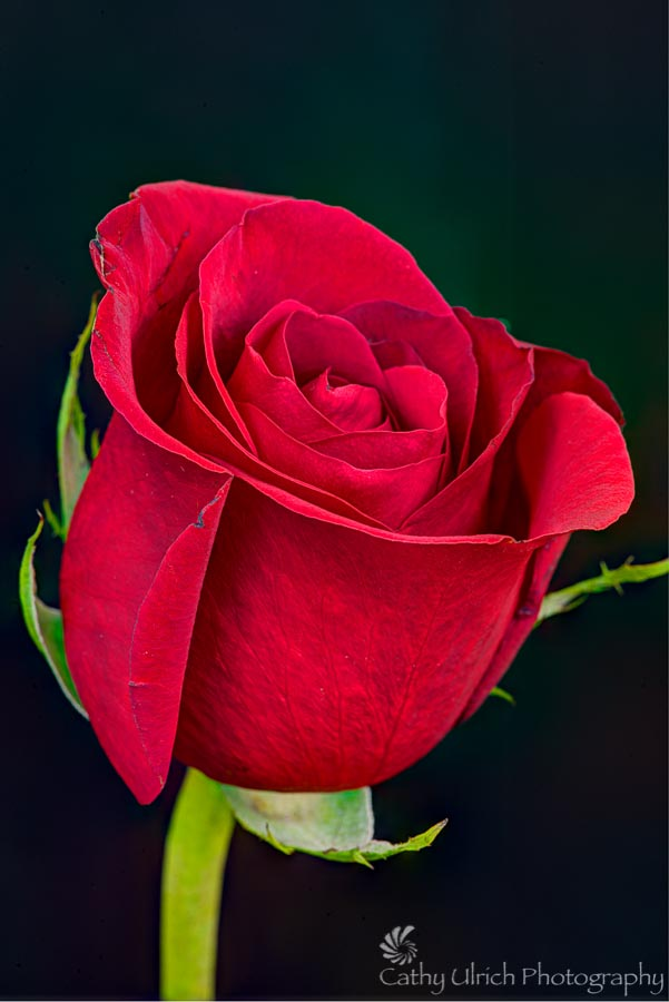 Red, Red Rose
