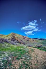 Coyote Ridge 1