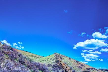 Coyote Ridge 2