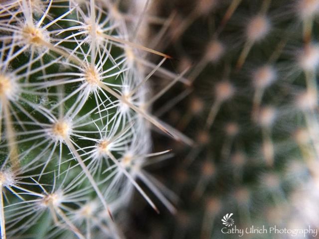 Spiny Cactus Macro